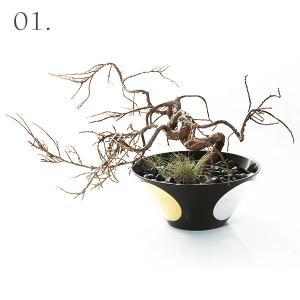 新作 寿恵広小鉢 日月 × 枯れ盆栽「真柏」