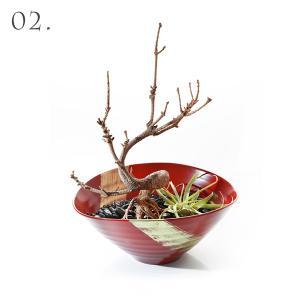 寿恵広小鉢 日月 × 枯れ盆栽「真柏」