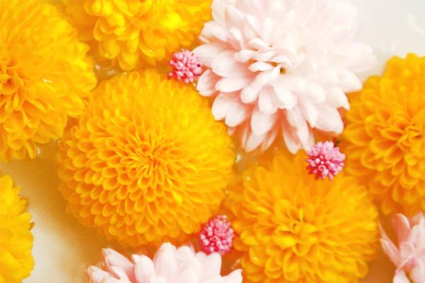 菊の節句をオシャレに彩る、菊のアレンジフラワー